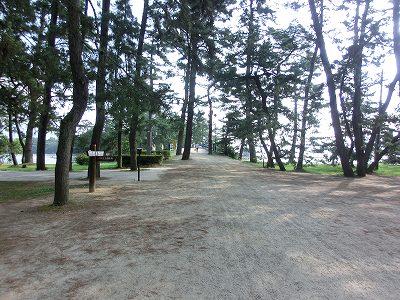 天橋立松林