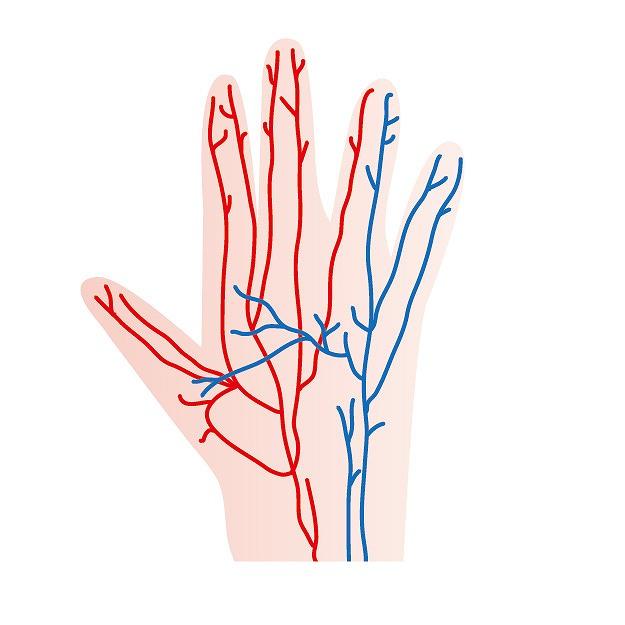 血管の若返り!毛細血管のゴースト化を防いで美肌を保つには
