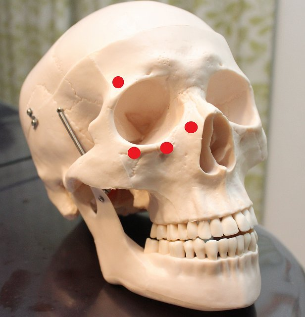 ligament-bone-eye